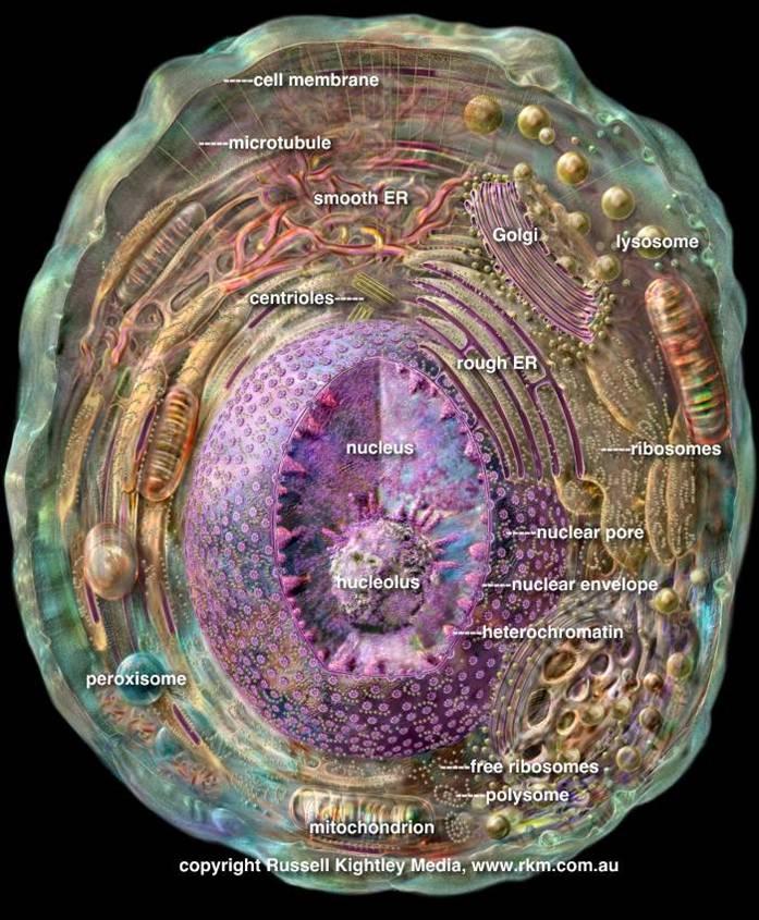 医学细胞生物学已经成为现代医学教育中的一门重要